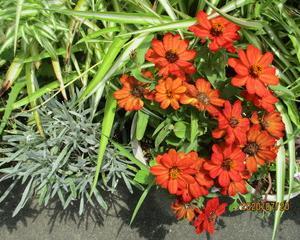 庭の花々 3