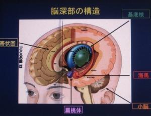 脳・情動・直観のしくみとシステム