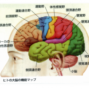 脳科学と教育 ①