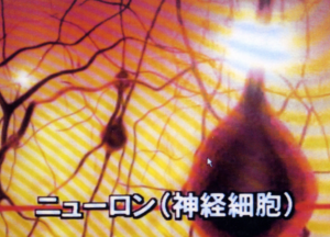 「脳科学と教育」ニューロンを探る ②