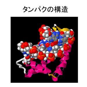 染色体・DNAの二重螺旋・二重螺旋と染色体・たんぱく質の構造