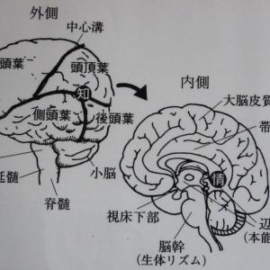 脳と「刈り込み」