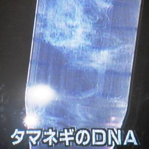 タマネギのDNA・サケのDNA・ヒトのDNA