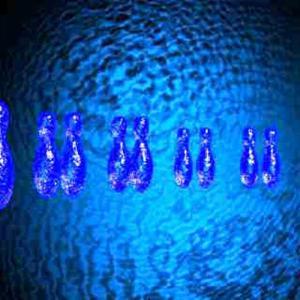DNA・染色体