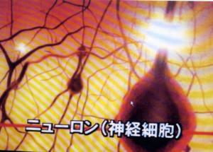 ニューロンの姿