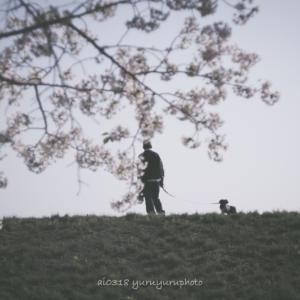 桜さんぽ with わんこ。