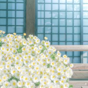 菊の花がきれいで。