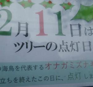 ガジュマルのイルミ点灯は12月11日でした。