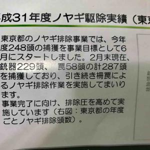 平成31年度(2019年~2020年)ノヤギ駆除実績(東京都)
