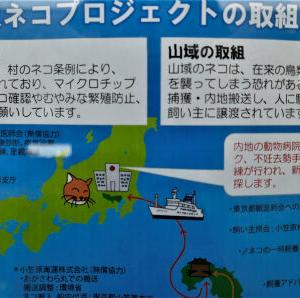 ノネコ島内譲渡のお知らせ 小笠原ネコプロジェクト