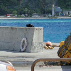 青灯台の小学生遊泳用のブイが撤去されました。