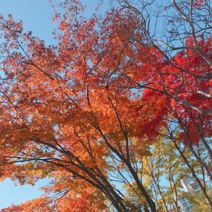 ~ソウルより~紅葉がきれいです!