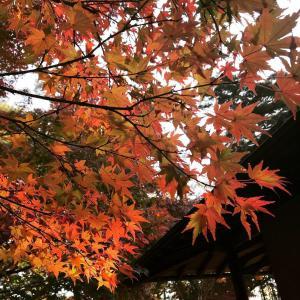 12月8日に日程追加!韓国茶の会・毎年恒例「紅葉季節の庭園でのお茶会」