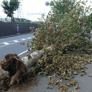 台風15号から5日目で・・・