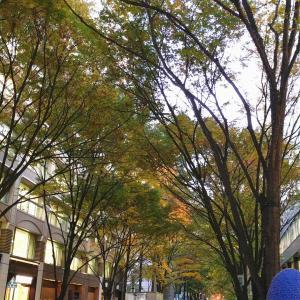 晩秋の街歩き♪