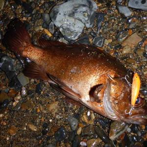 2020年初釣りは念願の南紀遠征で尺メバルを狙う!