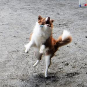 遊び方が解らない…犬を飼うな