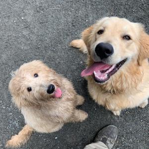 犬と遊ぶって体力勝負
