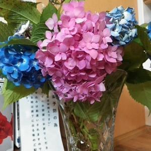 職場の紫陽花