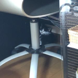 我が家に子猫がやってきました。