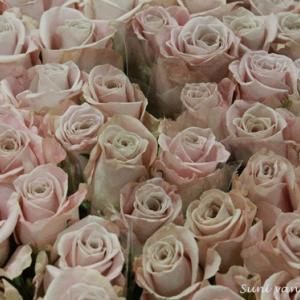 オランダの花は安いけれど・・・今ひとつ上手に生かせない