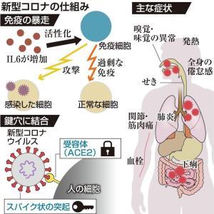 免疫暴走⁉️新型コロナウイルス