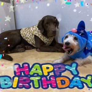 HAPPY BIRTHDAY☆彡ひな太&ふうた♪