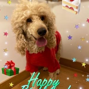 HAPPY BIRTHDAY☆彡ダイナ♪