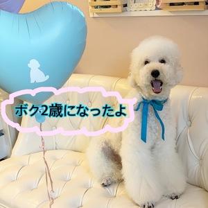 ミディアムプードル☆彡ショーンくん♪