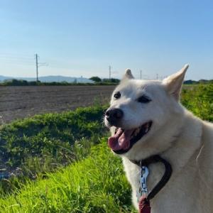 老犬ホーム☆彡ジョンくん