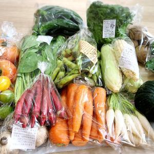 野菜DEカラーセラピー!できるって知ってた?