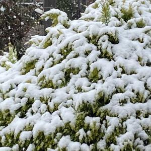 外出自粛と雪景色の日曜日 & 「3月の感想」をまとめる