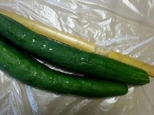 友人が大きな胡瓜をくれました。とても美味しかったです。「胡瓜」の俳句。