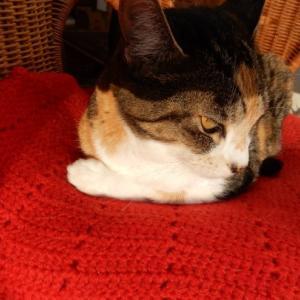 '19,12,5(木)トルコの石灰棚には猫も犬もいないのかな?