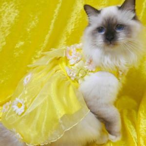 マリアのドレス姿