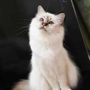 猫の夢こたつの布団買ったよ♪