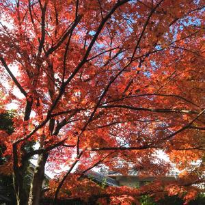 四季折々の景色を背に、どんな自分で、そこにいたい?