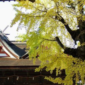 吉備津神社の銀杏の紅葉と七五三参りとあぜ道のれお君です