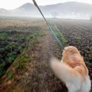 今朝のれお君の散歩コースは吉備の中山がガスで霞んでいます