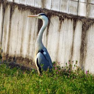 れお君の吉備路の野鳥観察です