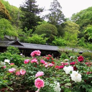 ステイホーム中の皆さんへ吉備津神社の牡丹園です