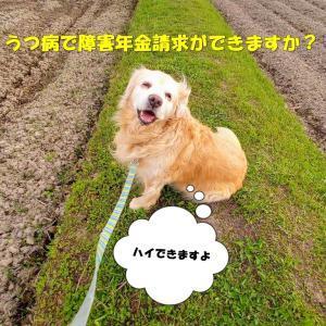 我が家のゴールデンレトリバーれお君は岡山障害年金請求サポートセンターの看板犬です。