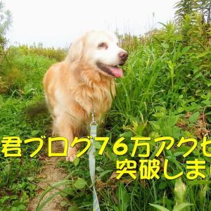 れお君ブログ76万アクセス達成と夏の吉備津神社です