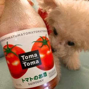 トマトマでリコピン摂取
