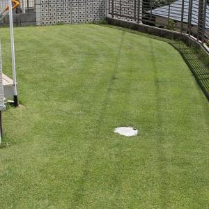 6回目の芝刈り 18mmと液肥