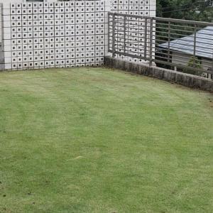 7回目の芝刈り 18mmと縁の整理