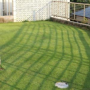 5回目の芝刈り 18mm