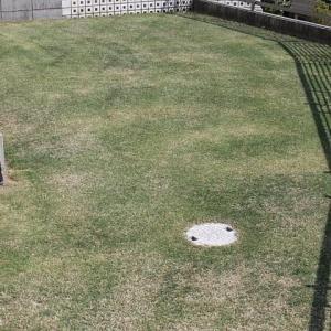 1回目の芝刈り 15mm