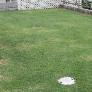 2回目の芝刈り 15mm