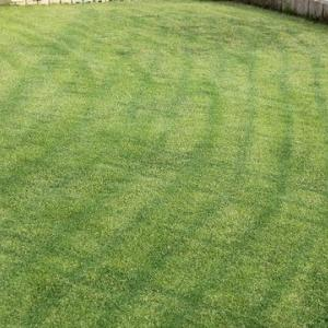 7回目の芝刈り 14mm